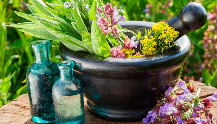 Plantas medicinales que pueden ayudar a curar el cáncer